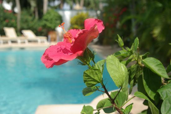 Paradera Park: Paradera Garden - Aruba