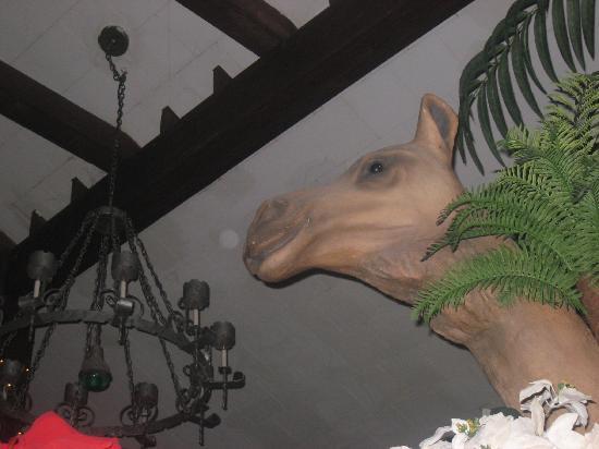The Matterhorn Inn: Camel In the great room