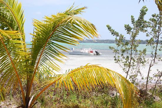 Small Hope Bay Lodge : Beach View
