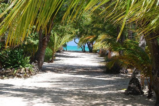 Small Hope Bay Lodge: Walk to the DiveDeck Centre
