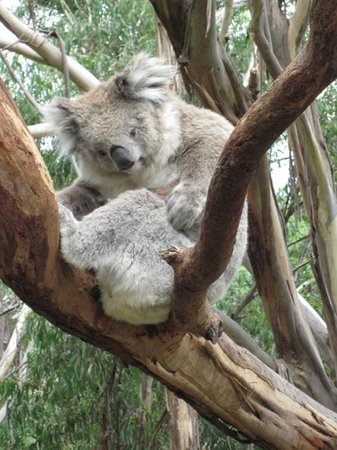 Cowes, Australia: so cute, so close