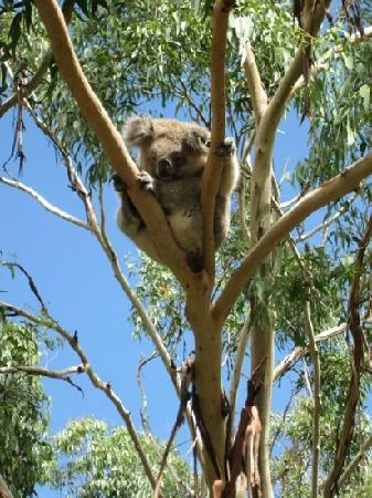 Cowes, Australia: feb 2011