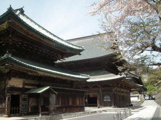 建長寺桜の写真その1