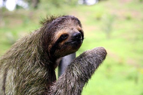 Bluff Beach Retreat: Friendly sloth
