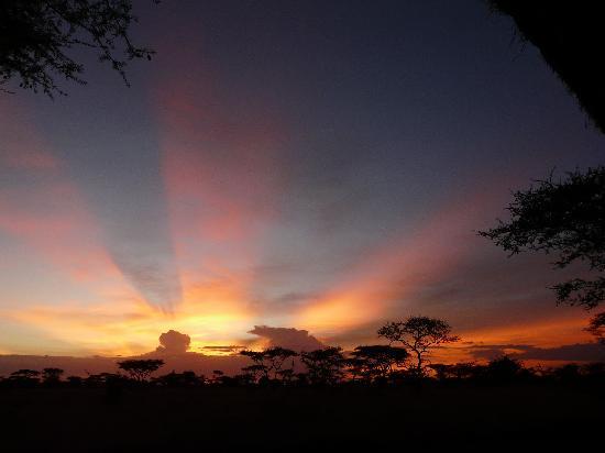 Serengeti Tented Camp - Ikoma Bush Camp: die schönesten Sonnenuntergänge