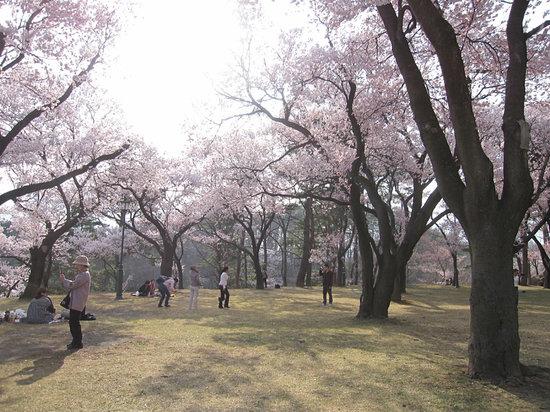 Ina, Ιαπωνία: 日暮れの景色も美しかったです