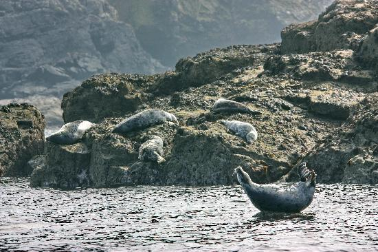 سانت آيفيس, UK: Seal Island at Low Tide