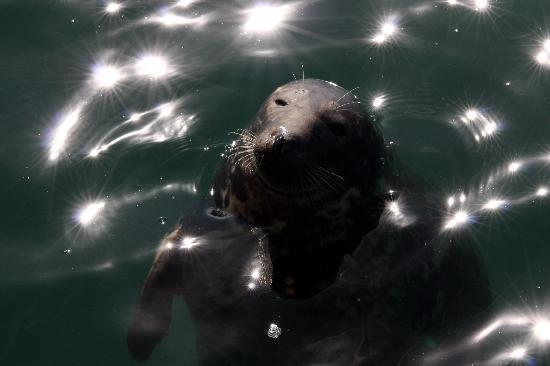 St Ives Boats: Seal  on a Sunny Day
