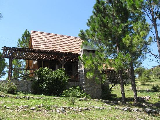 Cabanas Los Arroyitos : cabaña entre los pinos