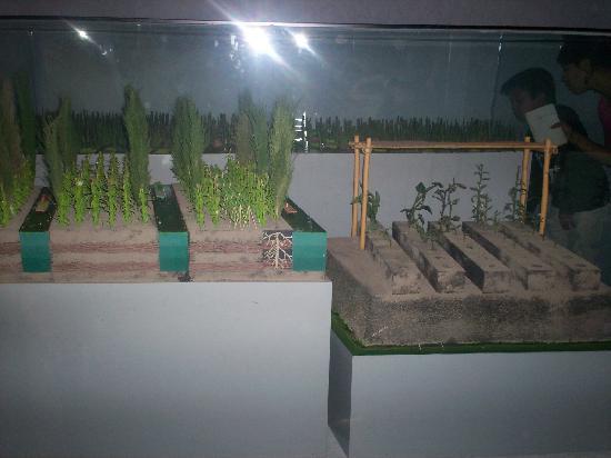 Museo del Templo Mayor: Templo Mayor Azteca. Representaciòn de las Chinampas, parcelas de siembra sobre el Lago de Texco