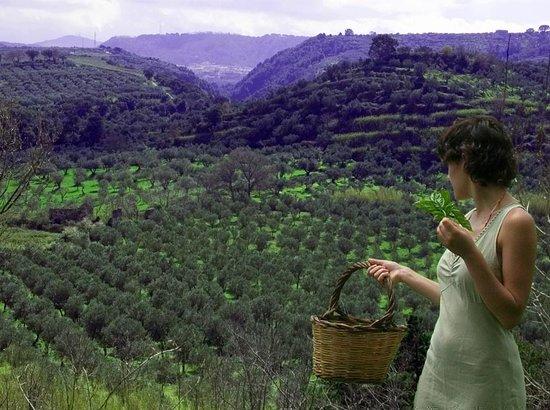 Maida photos featured images of maida province of catanzaro maida italy agriturismo costantino sciox Images