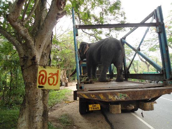 Villa Sunshine : Elefantentransport