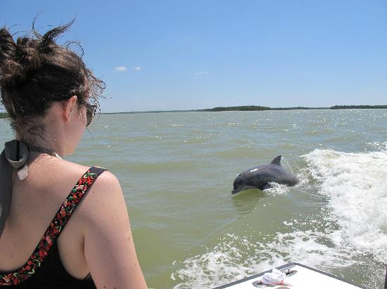 Everglades Fishing Charters : Dolphins and Daughter