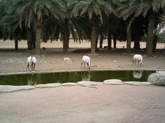 Arabian Wildlife Center Sharjah United Arab Emirates