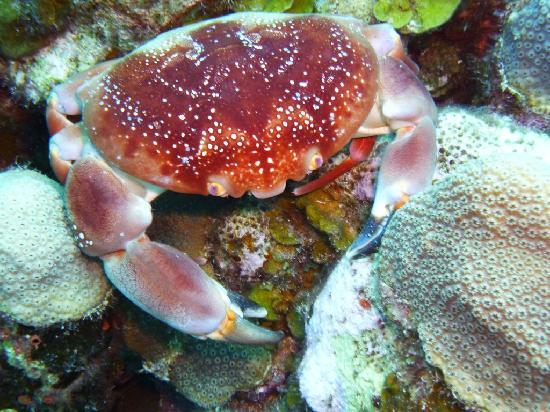 Scuba Zen: A nice crab