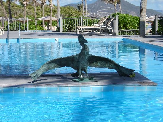 New Castle, Nevis: Wonderful Pelican Bronze at pool