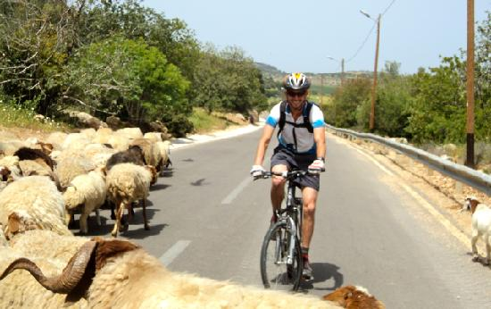 Bike Jerusalem Tours : Guide/history professor