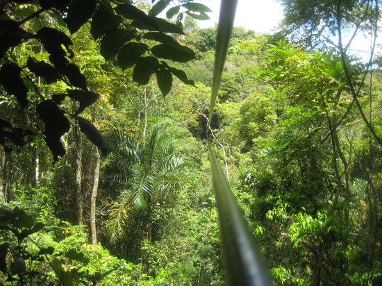 Guaynabo, Puerto Rico: The last and longest Zip line - this was the best one!