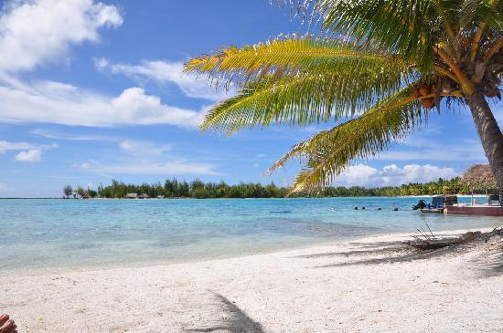 Blue Heaven Island lodge : The beach