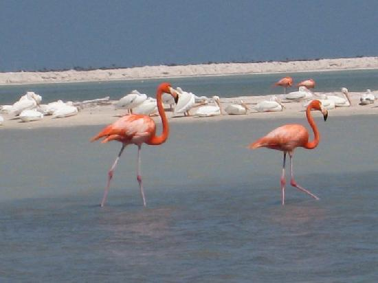 MexiGo Tours: flamingo5
