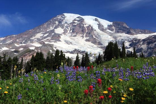 Mount Rainier National Park, WA: Mt Rainier Natl Park