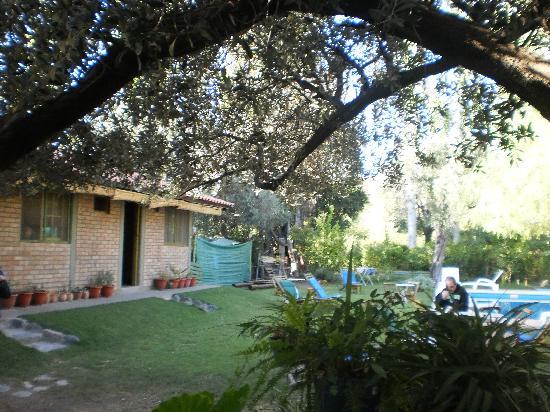 Cerro Del Valle Hotel Rustico: Jardin con rama de olivo