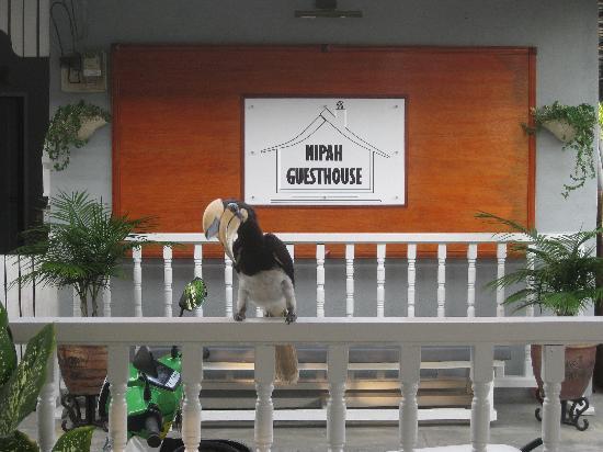 Nipah Guesthouse: Hornbill