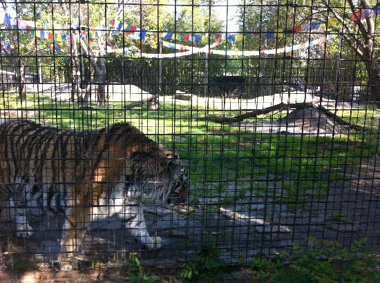 Hattiesburg Zoo: Tigger