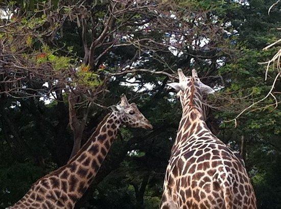Sri Chamarajendra Zoological Gardens,Mysore Zoo: Mysore zoo