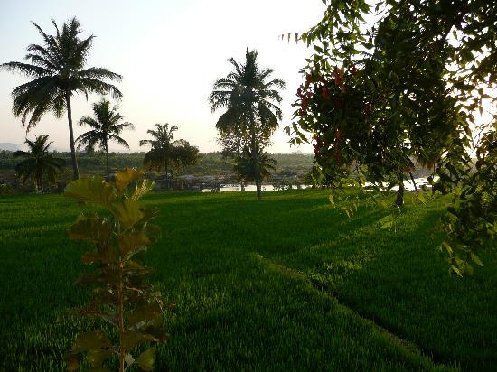 Mowgli Guest House: Panorama dalla terrazza