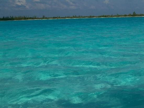 Two D's Diving and Tour Adventures: look at the color