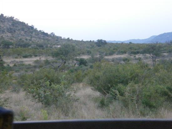 Pestana Kruger Lodge: view