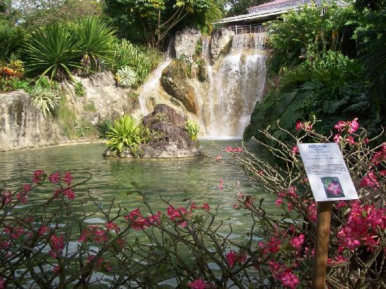 Arbre du voyageur picture of jardin botanique de for Jardin botanique deshaies
