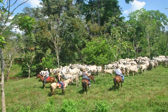 The Riding Adventure: cattle working tours goes once a week