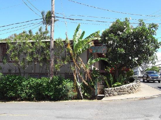 Banana Bungalow Maui Hostel 사진