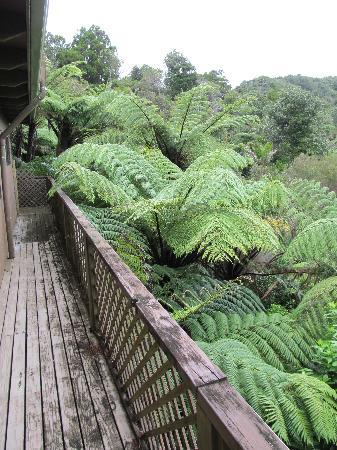 Lone Kauri Lodge: Copious fern trees
