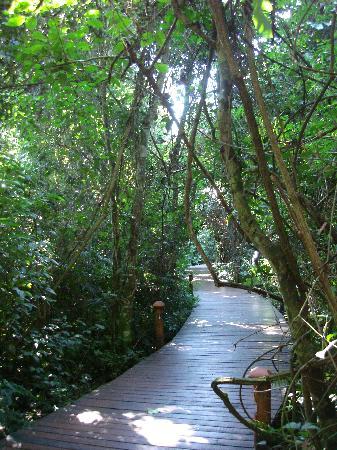 La Aldea de la Selva Lodge: Walking in the hotel gardens