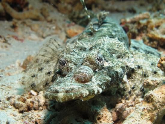 The Reef Dive Resort: Croc. Fish
