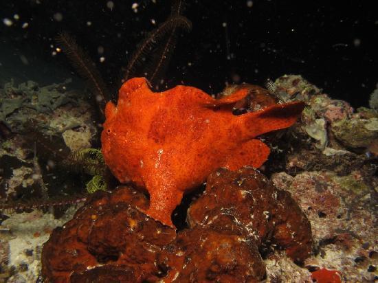 The Reef Dive Resort 사진