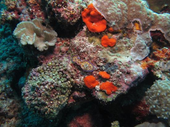 The Reef Dive Resort: Nudi