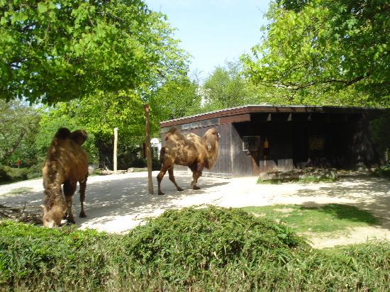 Karlsruhe, Alemania: Zoo - Camel
