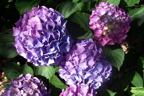 Le Passage du Four : Les fleurs du jardin