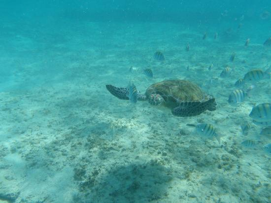 Olympus Tours: Sea Turtle Bahia Inha