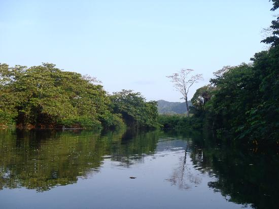 Cotton Tree Lodge: View of the cotton tree on the Moho River