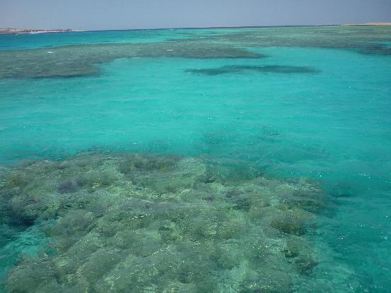 Jaz Makadi Star & Spa : snorkelling on the reef