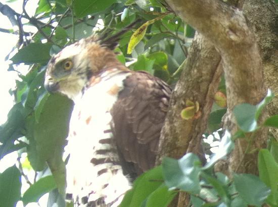 Parador Resort and Spa: Wildlife