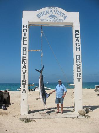 Hotel Buena Vista Beach Resort 190 Lb Marlin 4 20 11