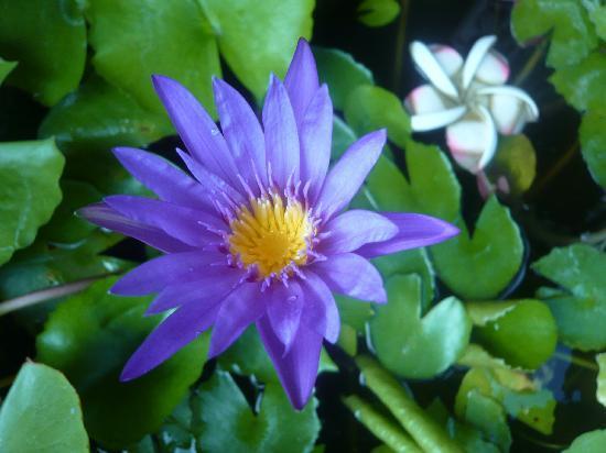 Losmen Cempaka: お花ちゃんも咲いてます