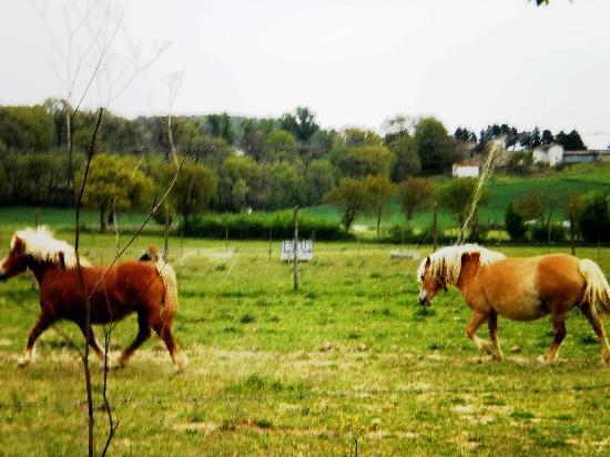 Agriturismo I Due Mondi: Gli splendidi cavalli