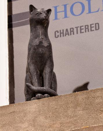 York Cat Trail: A cat from the cat trail